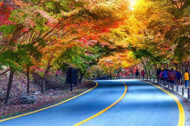 Du lịch Hàn Quốc - Đảo Nami