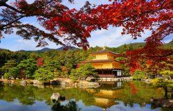 Kinh nghiệm du lịch Nhật Bản mùa thu từ A đến Z